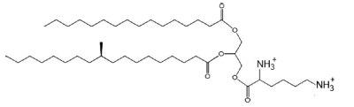 lysyl diacylglycerol