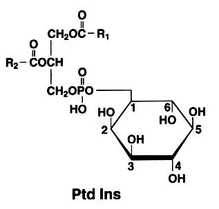 monophosphoinositide