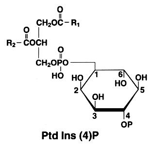 diphosphoinositide