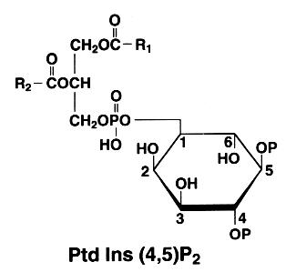triphosphoinositide