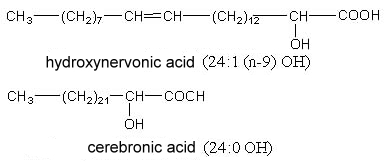 nervonic cerebronic acid