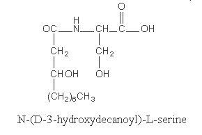 hydroxydecanoyl serine