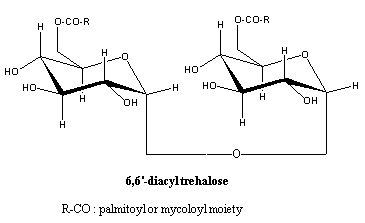 diacyl trehalose