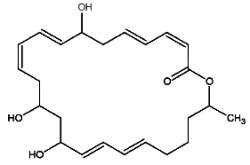 macrolactin